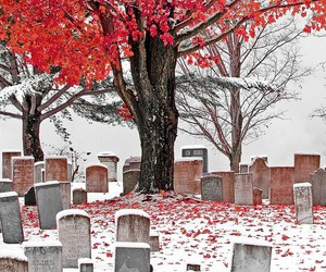 cemetery, red, and red leaves image