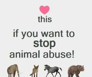 love, animal, and abuse image