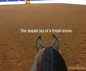 horse and fun image