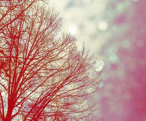 colors, spring, and tree image