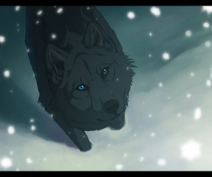 wolf, blue, and snow image