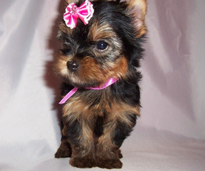 adorable, cute puppy, and black and brown puppy image