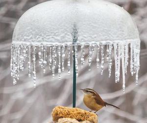 bird, frozen, and ice image
