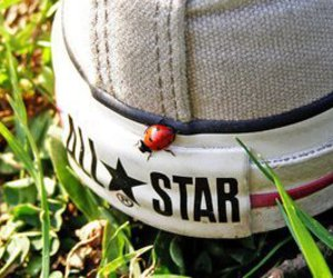 all star, converse, and nature image