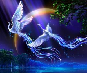 fantasy and bird image