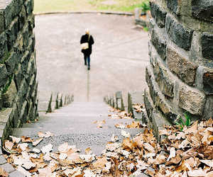 autumn, leaves, and stairs image