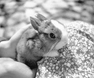 bunny, little, and cute image