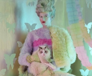 candy, cat, and colours image