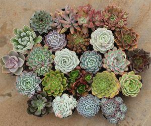 succulent and cactus image