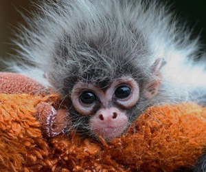 monkey, cute, and baby image