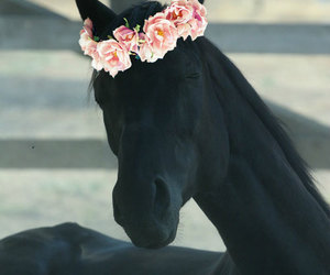horse, black, and flowers image