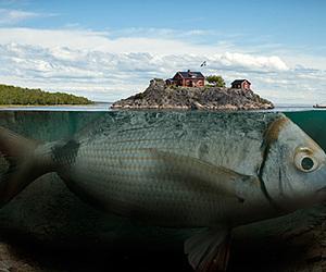 fish, Island, and art image