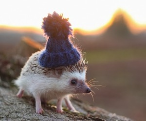 hat, pets, and hats image