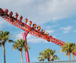 Roller Coaster, fun, and palm trees image