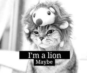 adorable, cat, and lion image
