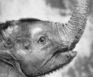 baby animals, elephants, and nature image