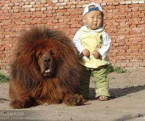 dog, kid, and cute image