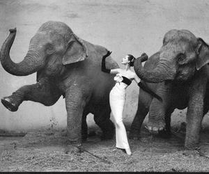 art, vintage, and balett image