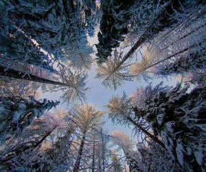 snow and trees image