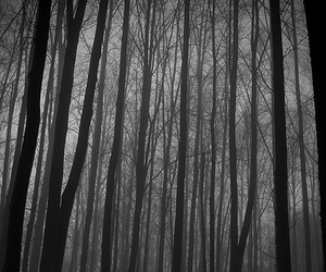 trees, forest, and black and white image