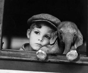elephant, boy, and black and white image