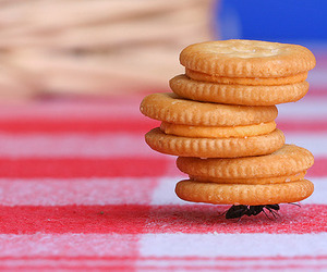 strong, ant, and Cookies image