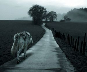 wolf, alone, and road image