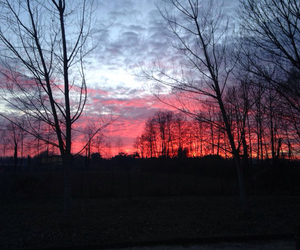 evening, red, and trees image