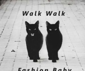 black, cats, and catwalk image