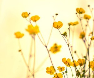 flowers, yellow, and buttercup image