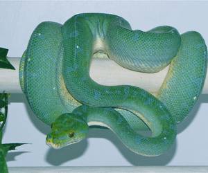 beautiful, green, and python image
