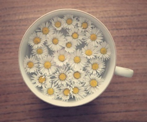 daisy, lovely, and white image