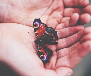 butterflies, lovely, and pretty image