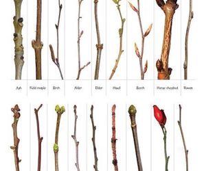 twigs, nature, and harvest image