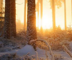 snow, sunset, and tree image