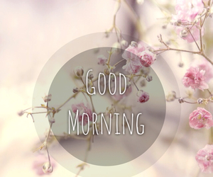 flowers, morning, and pink image
