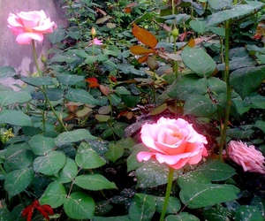 garden, pink, and memory image