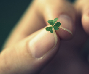 clover, macro, and summertime image
