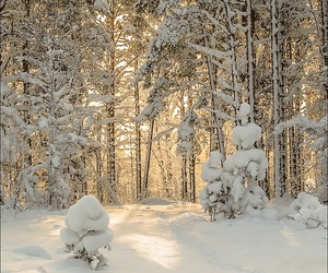forest, winter, and nature image