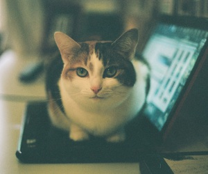 cat, laptop, and photography image