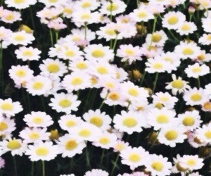 flowers, cute, and header image