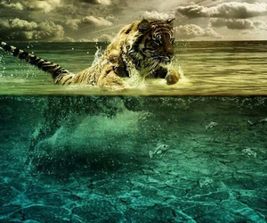 amazing, tiger, and jump image