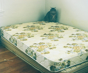bed, cat, and vintage image