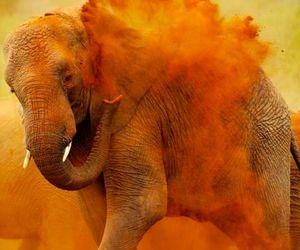 elephant, orange, and animal image