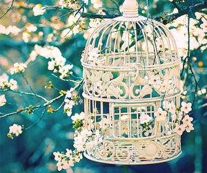 flowers, cage, and white image