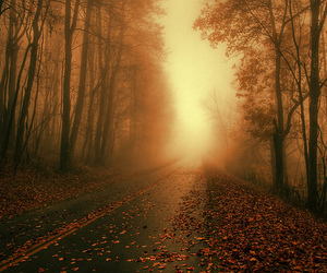 autumn, dawn, and forest image