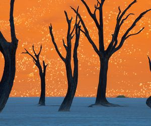 tree, namibia, and orange image