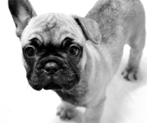 dog blackandwhite cute image