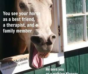best friend, horse, and kleenex image