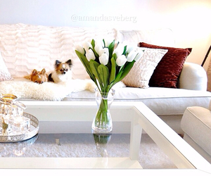 flowers, chihuahua, and dog image